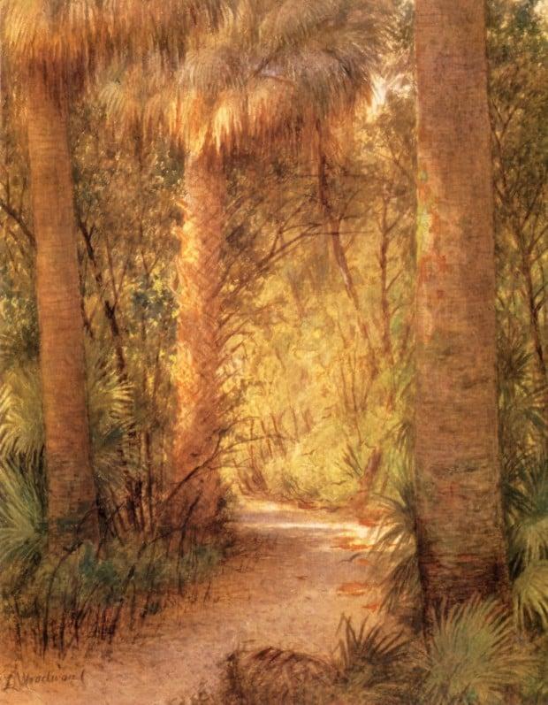 Jungle Rain, Palm Beach by Laura Woodward