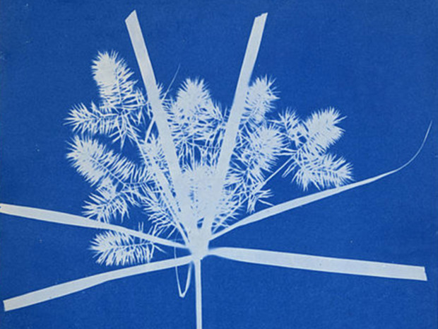 Anna Atkins, Photographs of British Algae: Cyanotype Impressions, Source: British Library, London