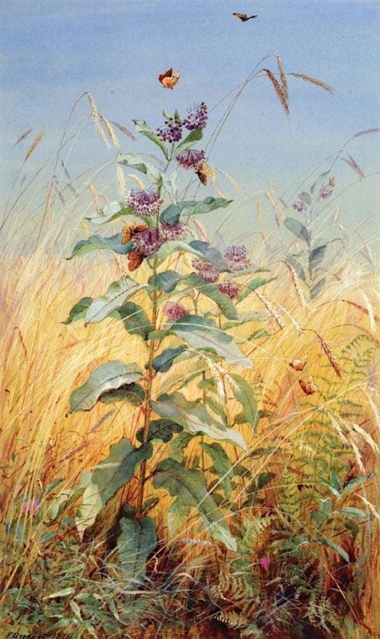 hudson river school female painters Fidelia Bridges; Milkweeds; 1876; Munson-Williams-Proctor Institute, Utica, NY.