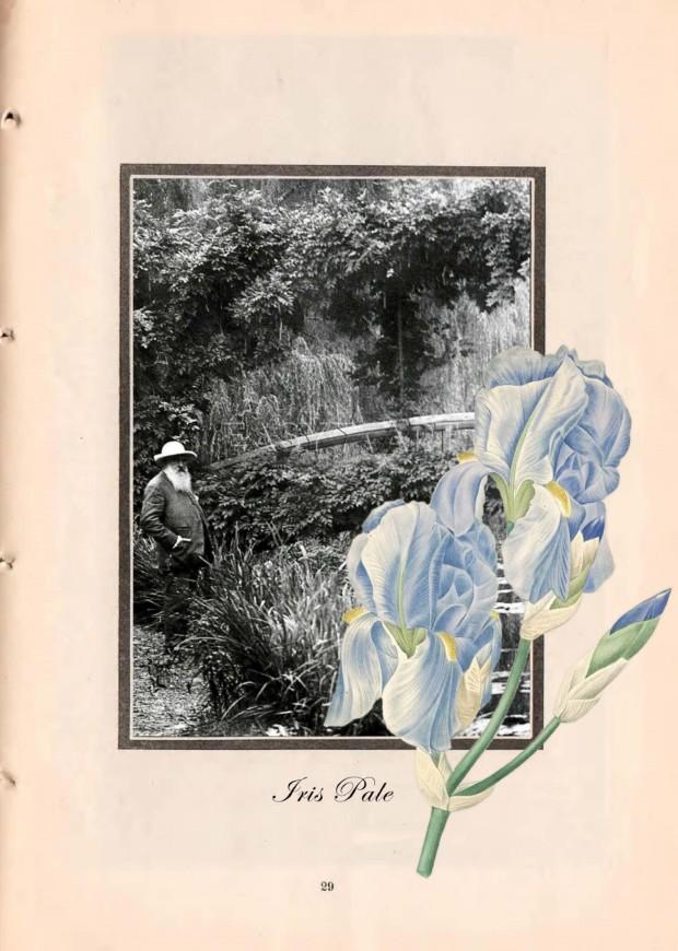 Irises, Monet in his garden
