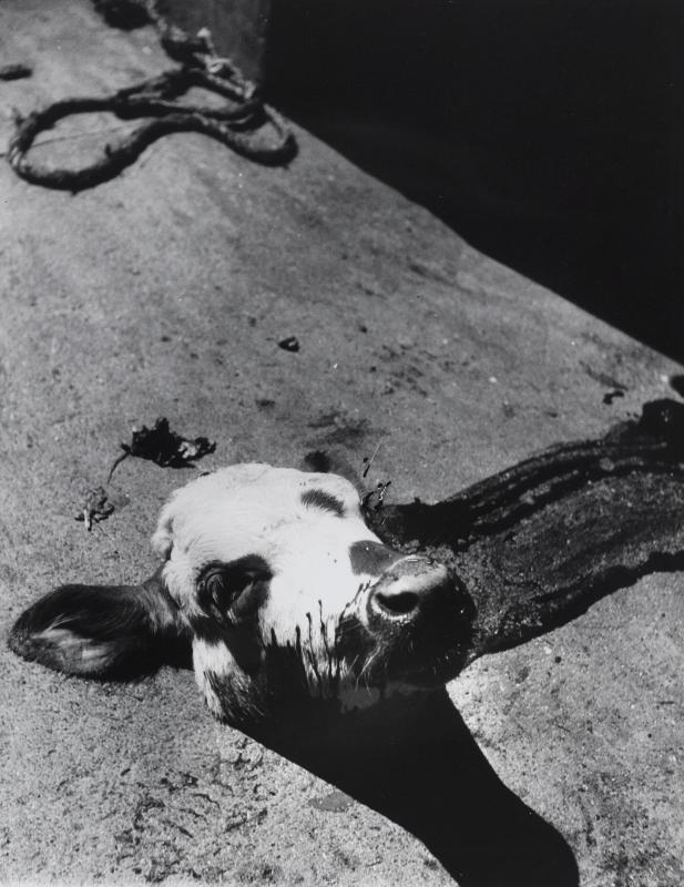 make me beautiful madame d'ora Separated calf's head in a parisian slaughterhouse, c. 1954 © Museum für Kunst und Gewerbe Hamburg | Photo: Museum für Kunst und Gewerbe, Hamburg,