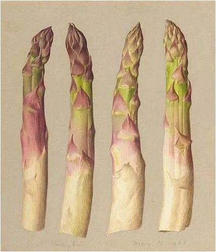 Asparagus in art louis xiv