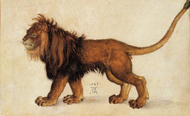 Dürer Animals:Albrecht Dürer, Lion, 1522, Albertina Museum, Vienna, Austria.