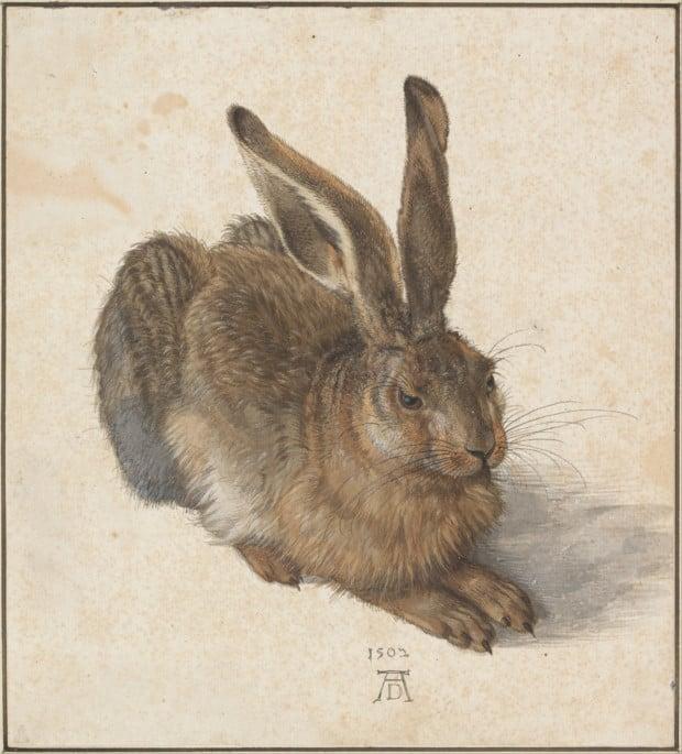 Dürer Animals: Albrecht Dürer, Young Hare, 1502, Albertina Museum, Vienna, Austria.