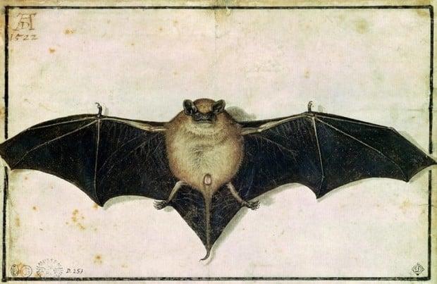 Albrecht Durer, Bat, 1522, Ashmolean Museum