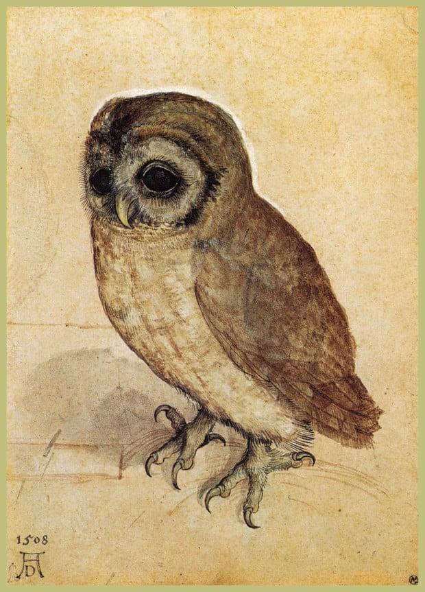 Dürer Animals: Albercht Dürer, Little Owl, 1508, Albertina Museum, Vienna, Austria.
