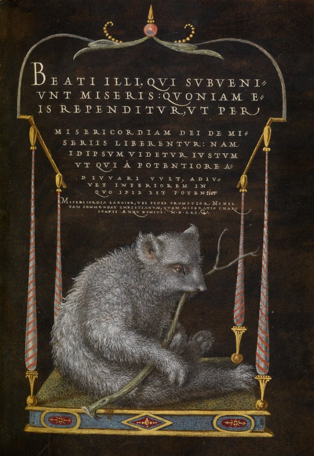 Joris Hoefnagel and Georg Bocskay, A Sloth, 1561 - 1562, The J. Paul Getty Museum, Los Angeles
