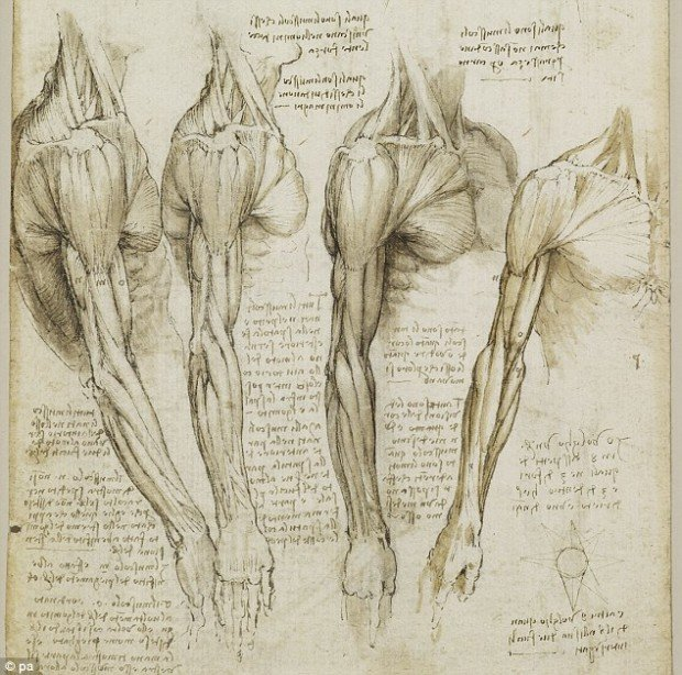 Leonardo da Vinci, The muscles of the shoulder, arm and neck, 1518, Royal Collection Trust / (C) Her Majesty Queen Elizabeth II