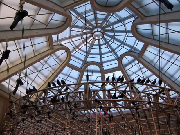 Cattelan's Pigeons in Guggenheim Museum in New York in 2011