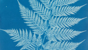 Anna Atkins Photography