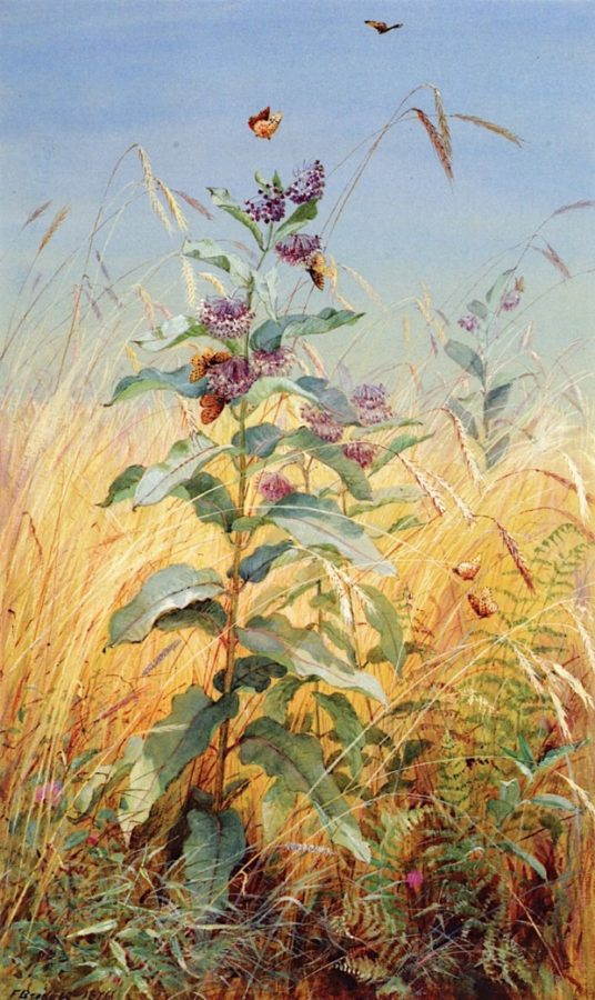 hudson river school female painters Fidelia Bridges; Milkweeds; 1876; Munson-Williams-Proctor Institute, Utica, NY.