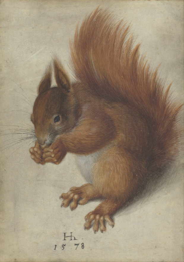 Red Squirrel (1528), watercolor on parchment, 32.5 x 25.6 cm. National Gallery of Art Animals Created By Hans Hoffmann