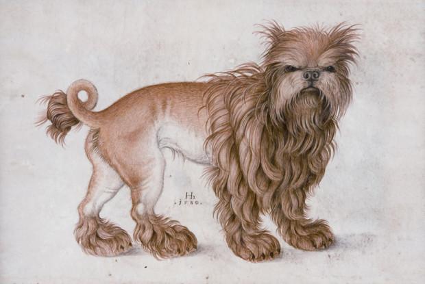 Hans Hoffmann, An Affenpinscher, 1580 Animals Created By Hans Hoffmann