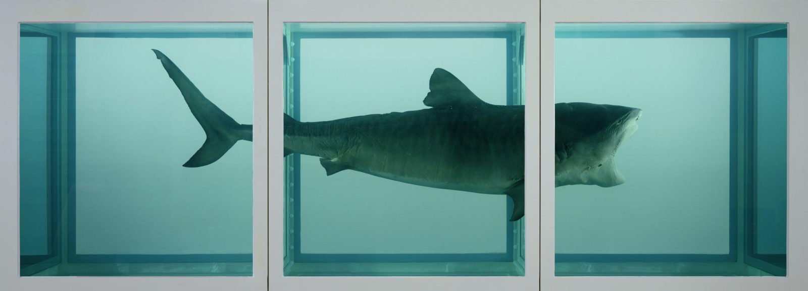 Damien Hirst, The Physical Impossibility of Death in the Mind of Someone Living, 1991, Tate Modern, London, UK.