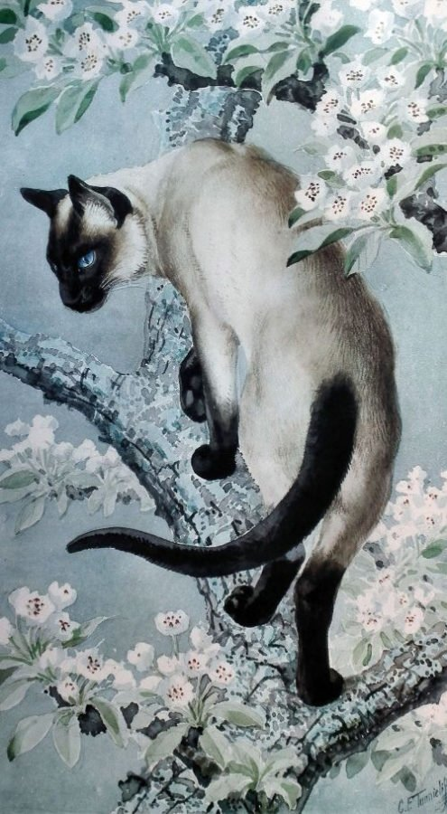 Siamese Cat On A Branch Of Apple Blossom cats by Charles Frederick Tunnicliffe