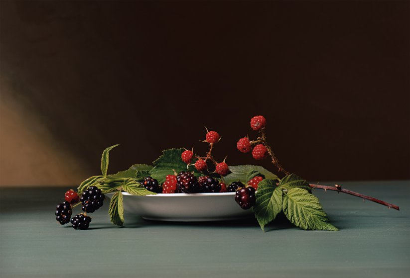 Sharon Core, Early American - Blackberries, 30.5 x 45.1 cm, analogue C-Print, 2008. Source: https://time.com/3798022/painting-with-a-camera-sharon-cores-early-american/