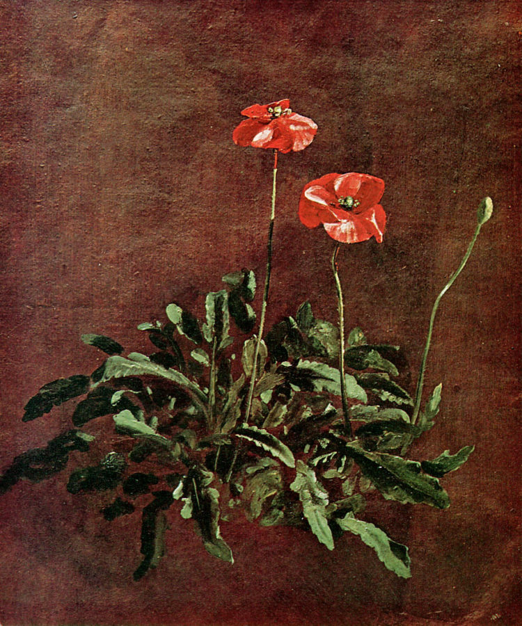 John Constable, Study of poppies, ca. 1832, Victoria and Albert Museum, London, remembrence day poppies in painting