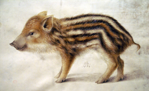 Hans Hoffmann, A Wild Boar Piglet, 1578, private collection, pigs in painting