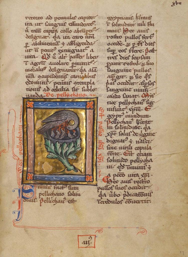 medieval bestiary pelican
