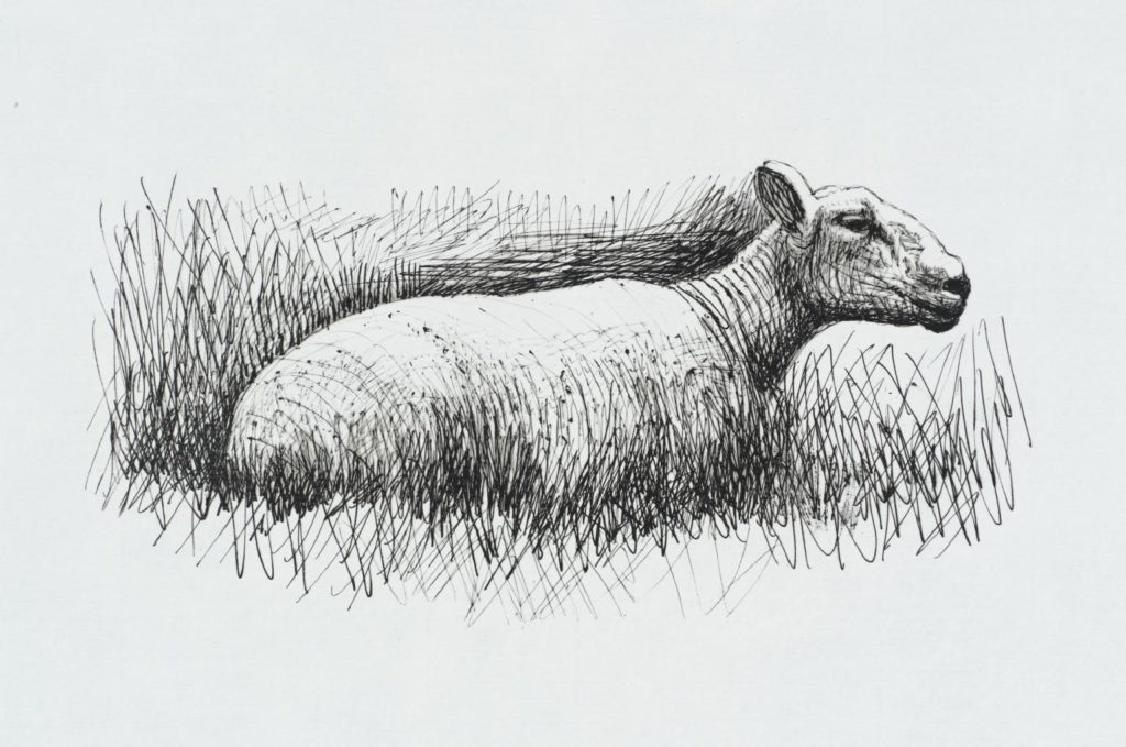 Henry Moore's Sheep