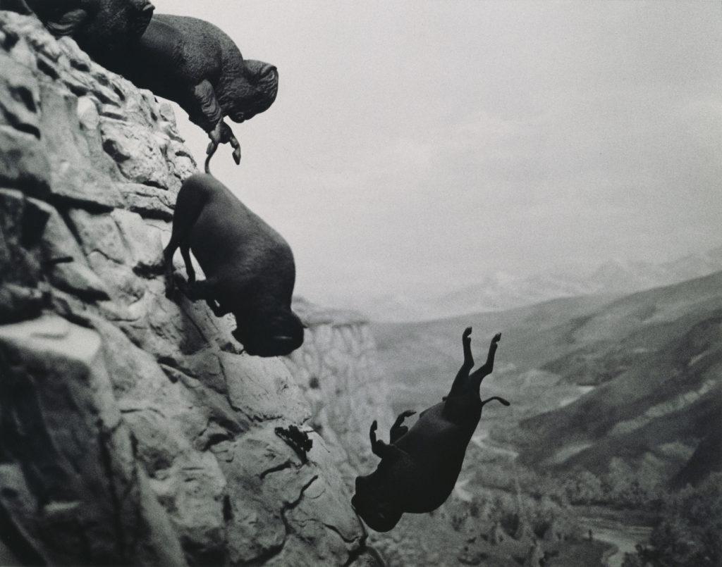 David Wojnarowicz, Untitled (Buffaloes), 1988–89, Collection of Steven Johnson and Walter Sudol Courtesy Second Ward Foundation. Courtesy of The Estate of David Wojnarowicz and P.P.O.W, New York, NY, USA.