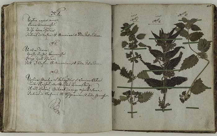 Herbarium wiwum, Lipik, 1828
