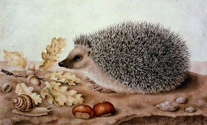 A Hedgehog in a Landscape by Giovanna Garzoni