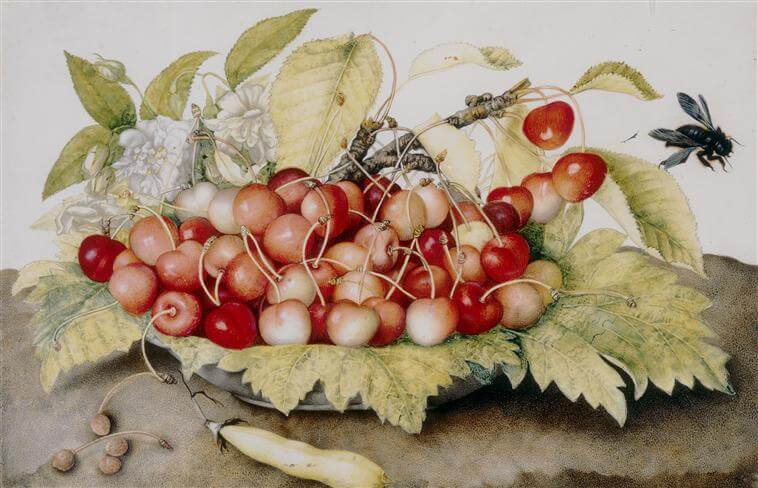 Still Life with Cherries by Giovanna Garzoni