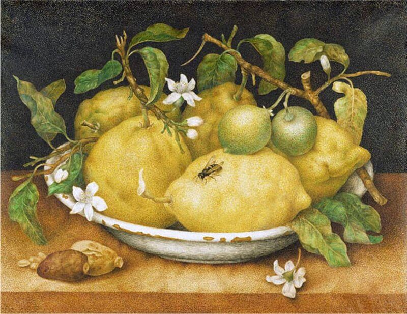 Still Life with a Bowl of Citrons by Giovanna Garzoni