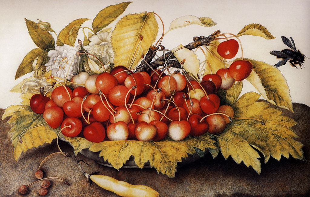 Still Life with Cherries by Giovanna Garzoni cover