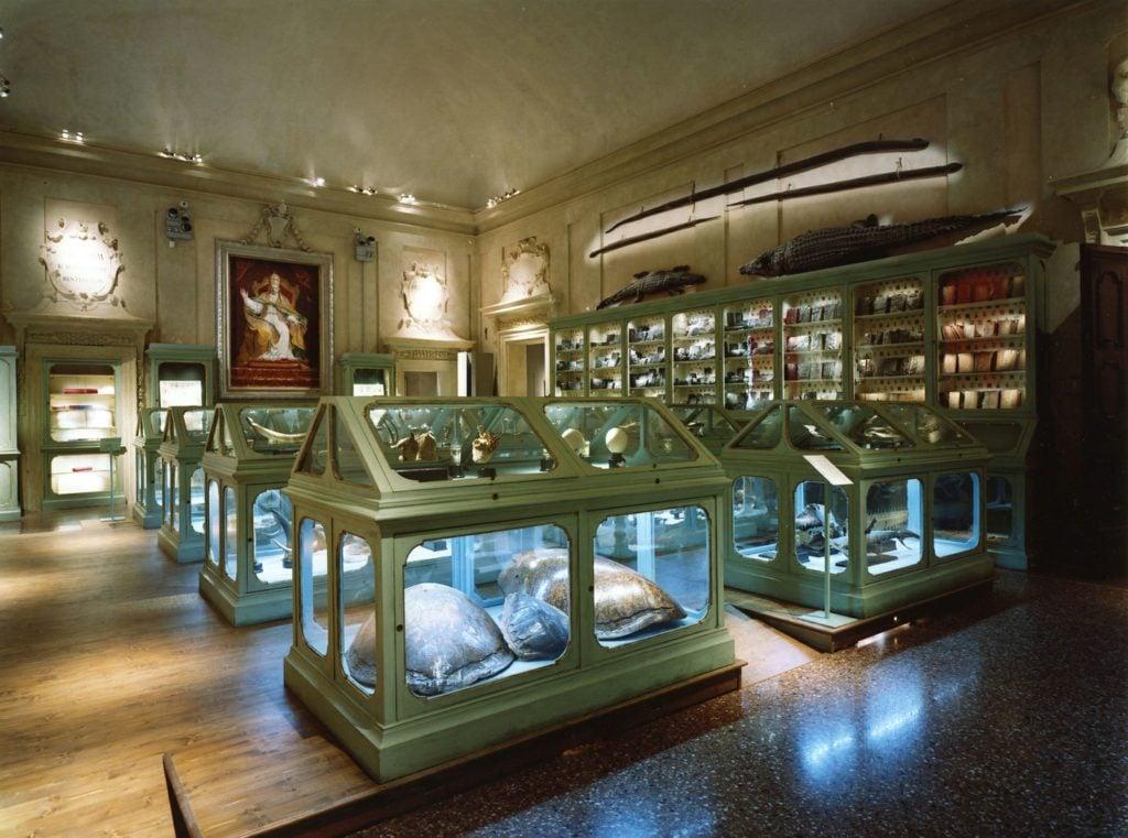 Ulisse Aldrovandi collection, The Museum of Palazzo Poggi, Bologna, Italy.
