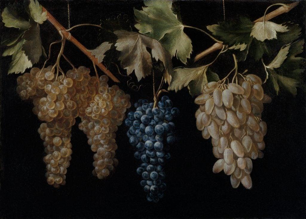"""Spanish bodegones: Juan Fernández """"El Labrador"""", Four Bunches of Hanging Grapes, ca. 1636, Museo del Prado, Madrid, Spain. Photo: Museo Nacional del Prado."""