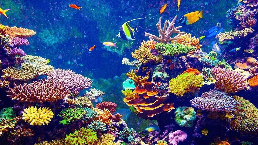 Colorful Places in the World: Great Barrier Reef, Coral Sea