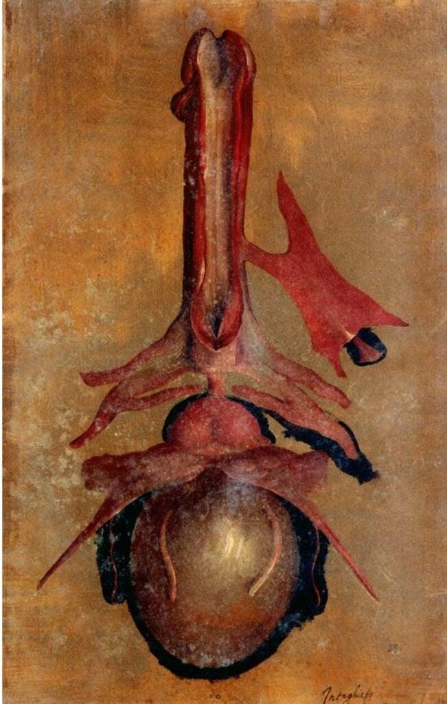 Medical illustration: Hieronimus Fabricius ab Acquapendente, Male genital apparatus, 16th century, from Tabulae Pictae.