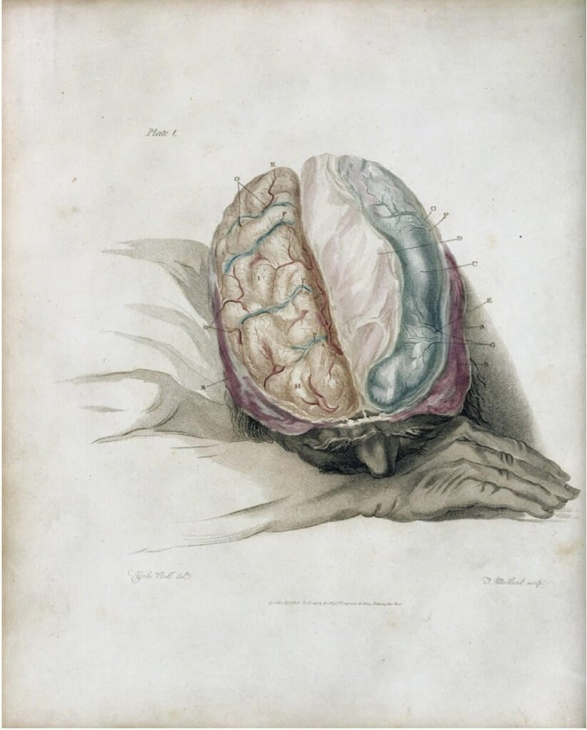 Charles Bell, Anatomy and subdivision of the brain, 1802.Courtesy of the Wellcome Collection.