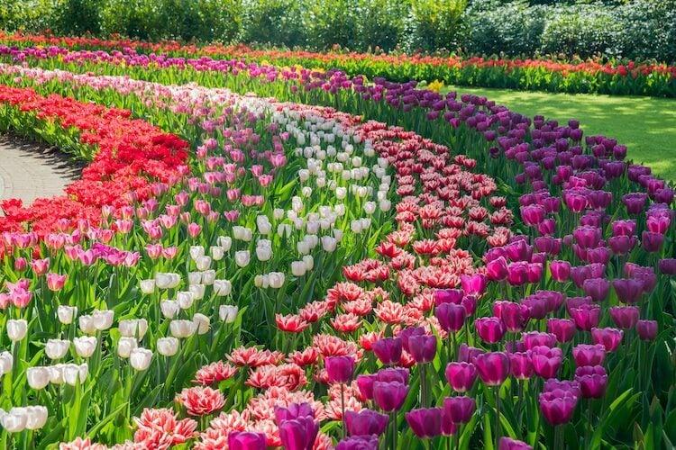 Colorful gardens and Parks: Keukenhof Tulip Garden, The Netherlands