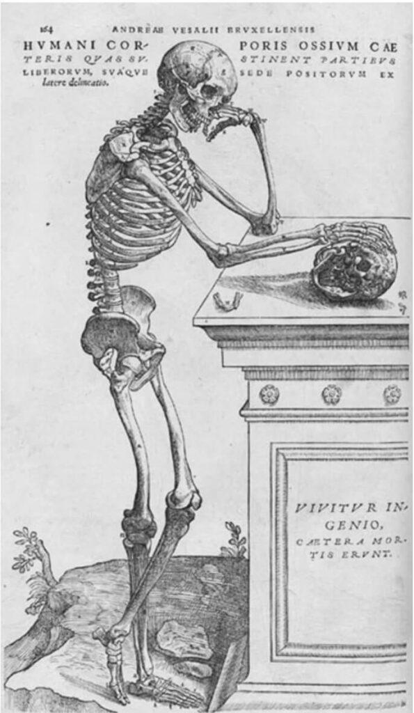 Medical illustration: Jan Stephan van Calcar, Second Bone Table, 1543, from Librorum de Humani Corporis Fabrica by Andreas Vesalius.