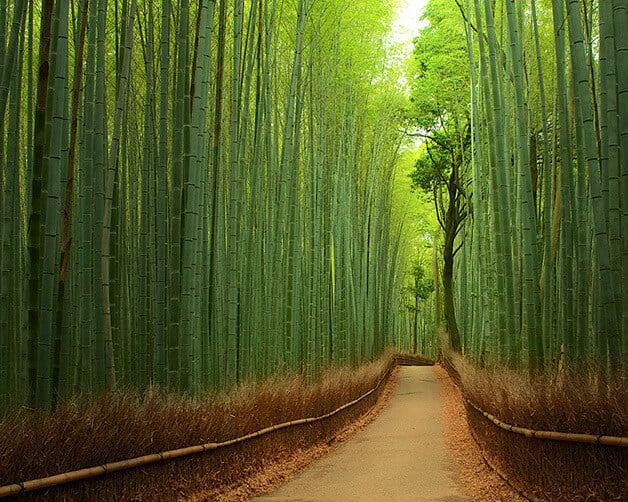 Most colourful parks: Bamboo Forest, Arashiyama, Japan