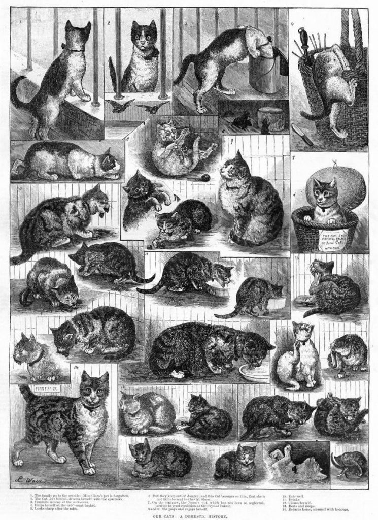 Louis Wain, Our Cats: A Domestic History