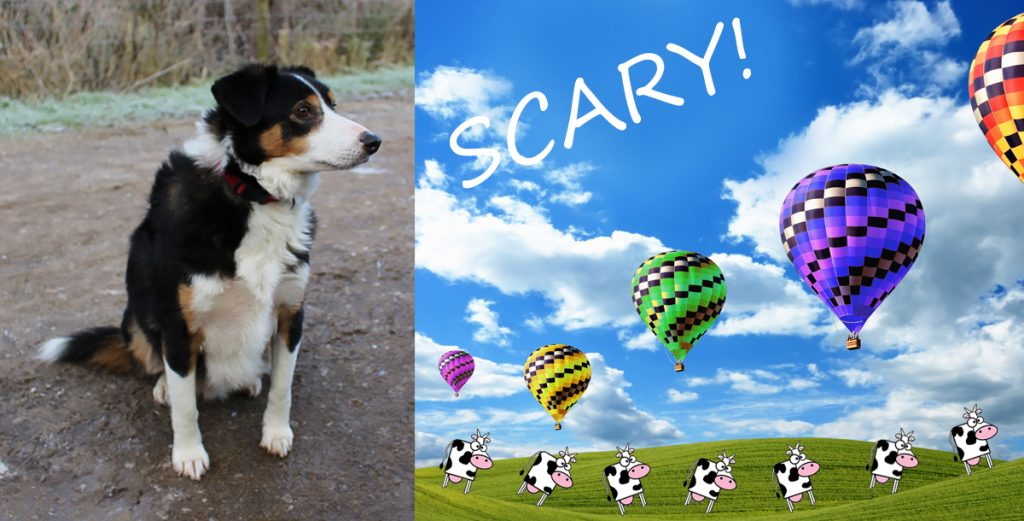 Flying Objects in Art: Ollie the Globophobic Collie