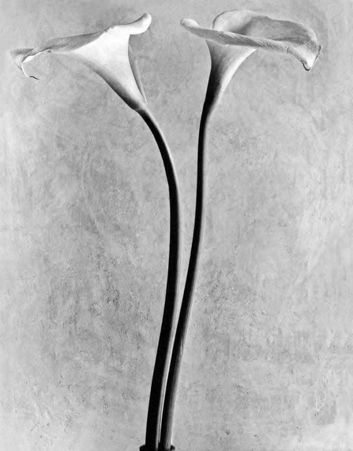 tina modotti Tina Modotti, Calla lilies