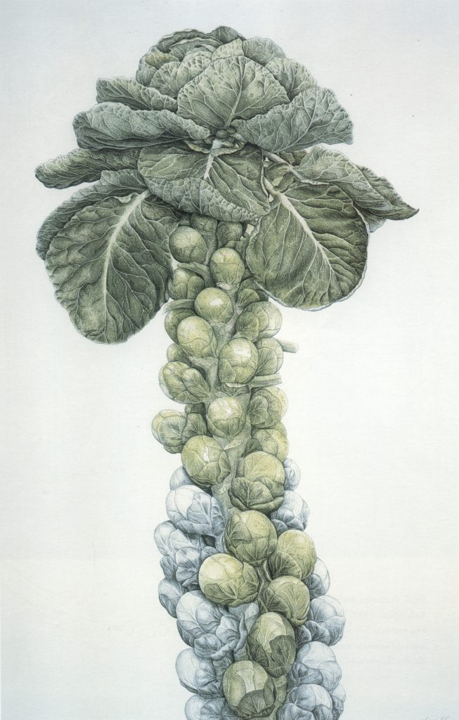 Ann Swan, Brussels Sprouts, 20th century, Shirley Sherwood Collection. A New Flowering: 1000 Years of Botanical Art, Shirley Sherwood.