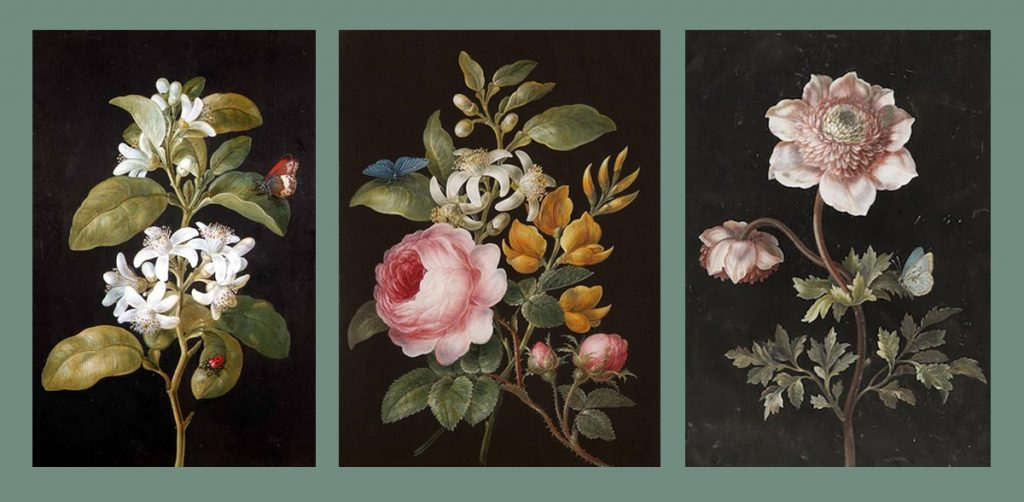 The Botanical Art of Barbara Regina Dietzsch: Pear Blossom, Roses and Lilies, Anemones and a Phengaris Arion
