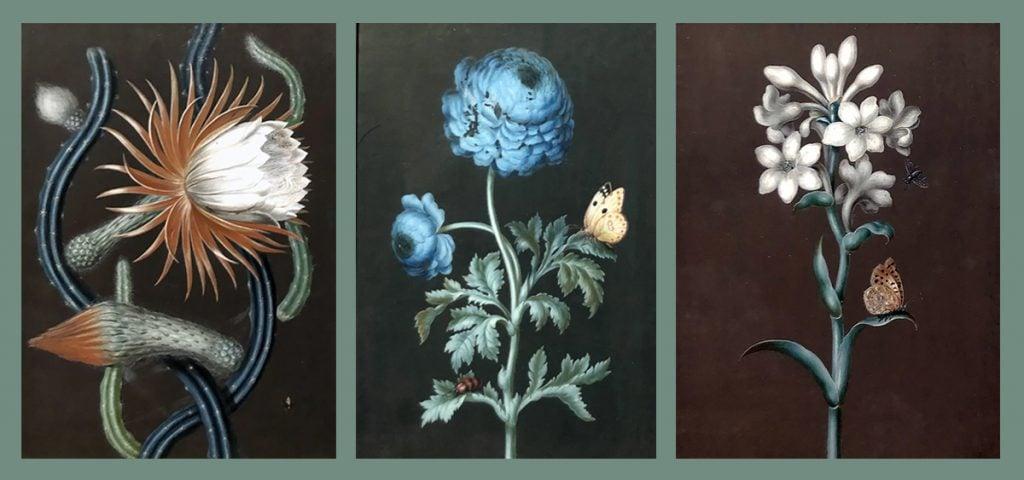 The Botanical Art of Barbara Regina Dietzsch: Ernst Friedrich Carl Lang