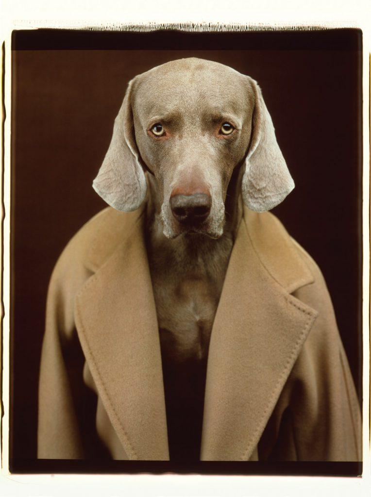 William Wegman, Dogs in Coats, 2015