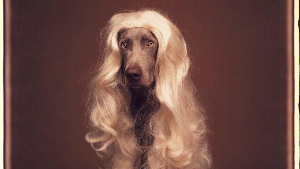 William Wegman, Blonde on Browne, 1991 - dogs in modern art