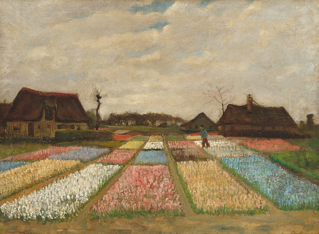 language of flowers, Vincent Van Gogh, a field of various colored tulips in the Netherlands