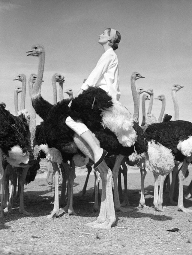 Norman Parkinson, Wenda and ostriches, 1951. Fashion Photographers