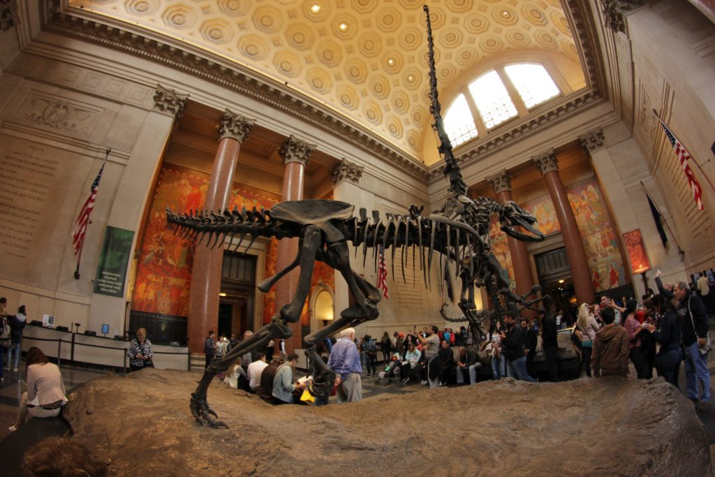 Dailyart magazine favorite museums: American Museum of Natural History, New York, NY, USA.