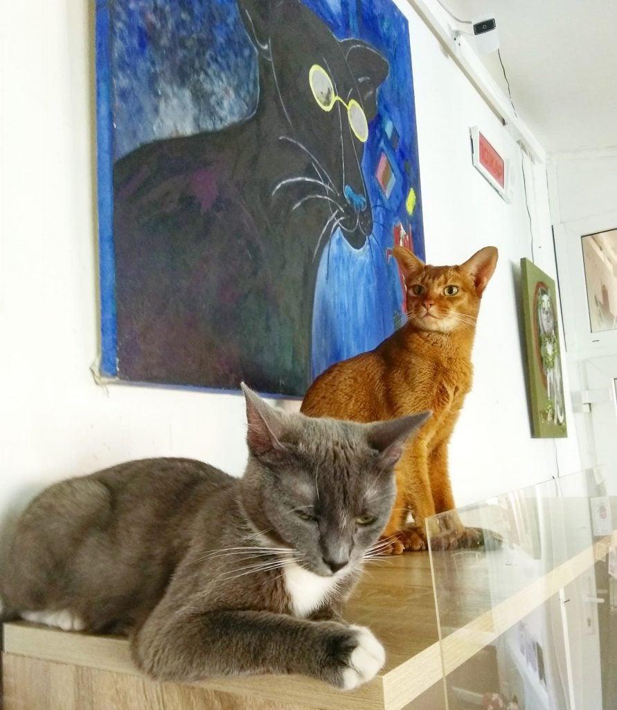 Inside Cat Museum in Minsk, Belarus.